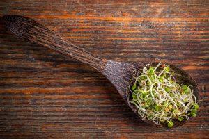 Cudowne właściwości liścia lucerny